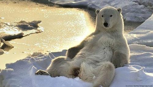 ursul penisului care a avut o erecție în timpul masajului